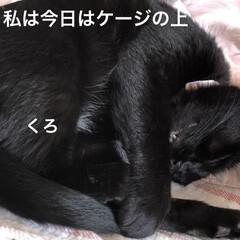 空/黒猫/にこ/くろ/猫/めん 今日はいいお天気。久しぶりに坂道下って駅…(5枚目)