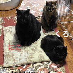 猫/めん/黒猫/にこ/くろ/癒し/... おはようございます😊 今日は少し暖かいか…