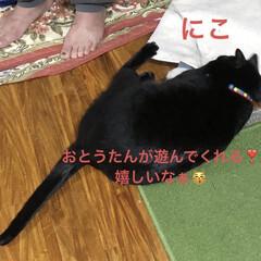 にこ/黒猫/癒し/猫飼いのしあわせ いつも穏やかで優しいにこはすっかりお兄ち…(2枚目)