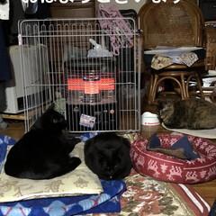ストーブ前/くろ/にこ/黒猫/めん/猫/... おはようございます😊 冬らしい寒さです♪…(1枚目)