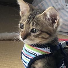 保護猫/ちび/猫/めん 今までで1番の接近。見てる私がハラハラド…(9枚目)