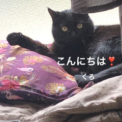 作り置き副菜/晩ご飯/めん/猫/にこ/くろ/... まったりと猫さまたちと過ごす昼下がり。 …(3枚目)