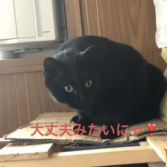 にこ/黒猫/お昼ご飯 お昼ご飯は暑いからぶっかけそうめん。 あ…(9枚目)