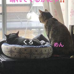 空/めん/猫/にこ/くろ/黒猫 朝からお元気な猫さまたち。お外の警備も怠…(7枚目)