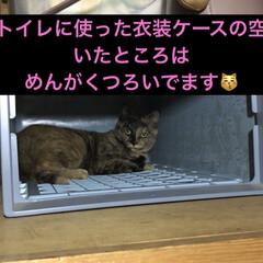 猫様トイレ事情/黒猫/にこ/簡単/暮らし トイレの縁に足乗せて💩してたにことめん。…(3枚目)