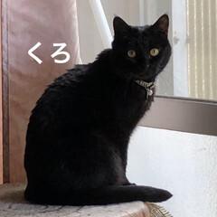 ちび/保護猫/黒猫/くろ/癒し/猫飼いのしあわせ/... 我が家の猫さまたち。ただ今見習いがいるの…