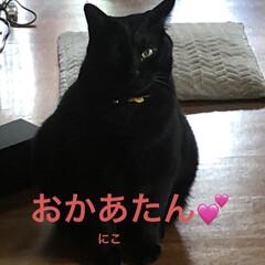 黒猫/くろ/にこ/猫/めん こんにちは😊 良いお天気ですね。 気候が…(6枚目)