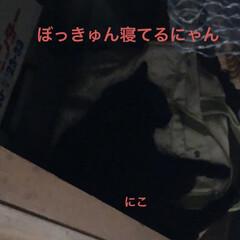 黒猫/くろ/にこ/猫/めん こんばんはです。 今日も一日お疲れ様です…(1枚目)