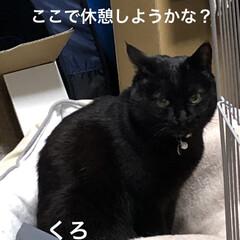 空/猫/猫飼いのしあわせ/くろ/にこ/黒猫/... おはようございます。 良いお天気です。し…(2枚目)