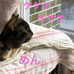 朝ご飯/猫/めん/黒猫/くろ/にこ 今朝も冷えますね。 猫さまたちそれぞれの…(3枚目)