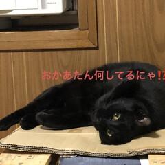 晩ご飯/めん/猫/にこ/くろ/黒猫 こんばんはです。 今日も一日お疲れ様でし…(4枚目)