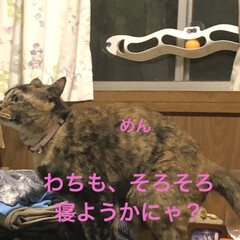 めん/猫/にこ/くろ/黒猫 こんばんはです。 ただ今猫さまたちは寝室…(5枚目)