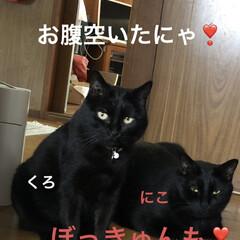 空/お昼ご飯/購入品/にこ/くろ/黒猫/... 青空です❣️それにしても暑い💦 午前に買…(9枚目)