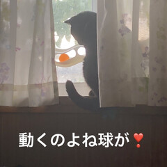くろ/黒猫/3COINS 3日ほど前からくろが窓につけているおもち…(7枚目)