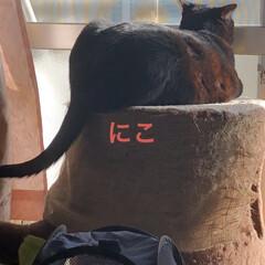 晩ご飯/くろ/にこ/黒猫/猫/めん/... 今日も一日お疲れ様です。普段散らかってる…(3枚目)
