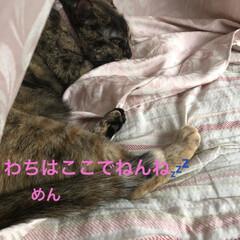晩ご飯/お昼ご飯/めん/猫/にこ/くろ/... こんばんはです。 今日も一日お疲れ様です…(6枚目)