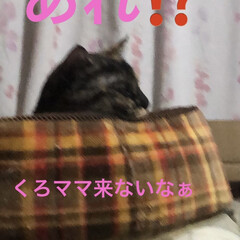晩ご飯/猫飼さんのしあわせ/黒猫/くろ/猫/めん/... 今日も一日お疲れ様でした。 今日は暑かっ…(7枚目)