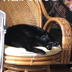 猫飼のしあわせ/癒し/にこ/黒猫/暮らし 今日はすごく伸びやかに健やかに過ごされて…