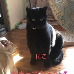 黒猫/くろ/にこ/猫/めん 今日の猫さまたち😼😺😸 やっぱりわかるん…(6枚目)