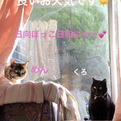 親子/猫/めん/黒猫/くろ/にこ/... 日差しがいっぱいの良いお天気。我が家は窓…