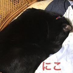 晩ご飯/黒猫/くろ/にこ/猫/めん 今日も一日お疲れ様です。 晩ご飯は煮しめ…(3枚目)