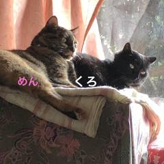 空/黒猫/くろ/にこ/猫/めん おはようございます☀ 暑いですね💦 少し…(4枚目)