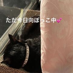 日向ぼっこ/くろ/にこ/黒猫/めん/猫/... 午前中はとってもいいお天気☀️ 久しぶり…