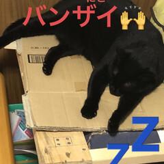 晩ご飯/めん/猫/にこ/くろ/黒猫 晩ご飯は旦那さんと合作。 旦那さんがほう…(5枚目)