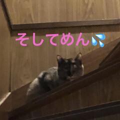 空/振袖/猫/めん/くろ/黒猫/... 今日末娘が大学を卒業します。 早朝に知り…(7枚目)