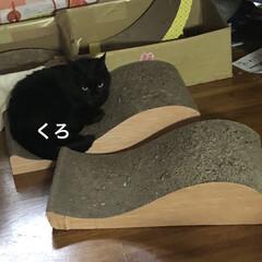 黒猫/くろ/にこ/猫/めん 朝ご飯食べて遊びタイム。(6枚目)