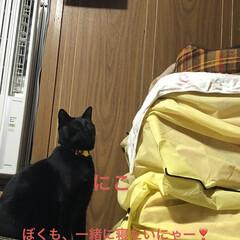 猫/めん/黒猫/くろ/にこ/癒し/... この頃よく寝室へ来るにこくん。 めんとく…