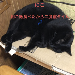 朝ご飯/黒猫/くろ/にこ/猫/めん 今朝の猫さまたち。くろもにこもめんも朝は…(2枚目)