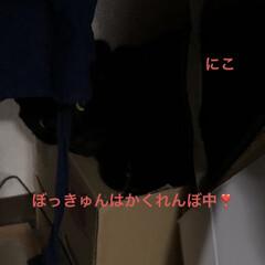 晩ご飯/黒猫/くろ/にこ/猫/めん こんばんはです。今日も一日お疲れ様です。…(4枚目)