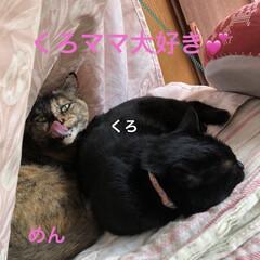 空/黒猫/にこ/くろ/猫/めん 今日はいいお天気。久しぶりに坂道下って駅…(6枚目)