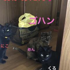 猫/めん/晩ご飯/黒猫/くろ/にこ こんばんはです。 今日も一日お疲れ様です…(2枚目)