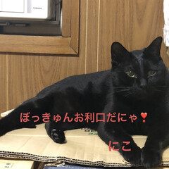 空/黒猫/くろ/にこ/めん/猫 おはようございます☁️ 夜中よく雨が降り…(4枚目)