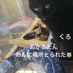 猫飼いのしあわせ/癒し/くろ/にこ/黒猫/めん/... 良いお天気の中、落ち着いて寝てる猫さまた…(1枚目)