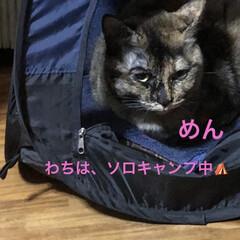 朝ご飯/空/くろ/黒猫/にこ/めん/... おはようございます☀朝、明るくなるの早く…(4枚目)