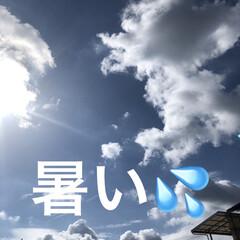 空/購入品 早朝は曇り空かなぁと思ってたらこんな青空…