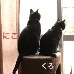 くろ/にこ/黒猫/めん/猫/癒し/... 朝ご飯を食べてのんびり過ごす猫様たち😊 …