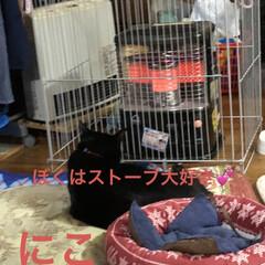 朝ご飯/猫/めん/黒猫/にこ/くろ/... 今朝の我が家。早朝から3匹と1人でストー…(3枚目)