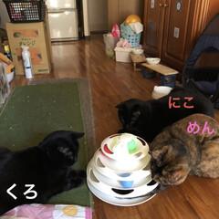晩ご飯/猫/めん/黒猫/にこ/くろ こんばんはです。 今日も一日お疲れ様です…(2枚目)