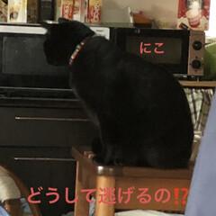 空/マスク/お花/くろ/にこ/黒猫/... おはようございます。今朝はまだ曇ってまし…(7枚目)