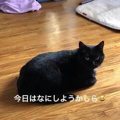 にこ/くろ/黒猫/猫/めん おはようございます☀ 雲はありますがお日…(6枚目)