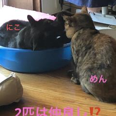 購入品/お昼ご飯/黒猫/くろ/にこ/猫/... 今日は朝からなんかシャワー浴びたくなるほ…(9枚目)