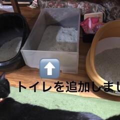 猫様トイレ事情/黒猫/にこ/簡単/暮らし トイレの縁に足乗せて💩してたにことめん。…