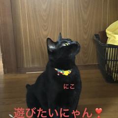 空/にこ/くろ/黒猫/猫/めん おはようございます☀ いいお天気です。そ…(4枚目)