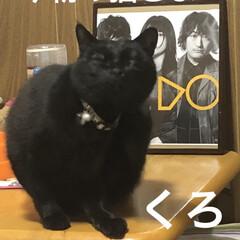 ラップ収納 今日の猫さま😺
