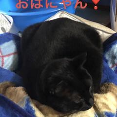 日向ぼっこ/猫/めん/黒猫/にこ/くろ/... おはようございます☀️ 昨夜はなかなか眠…