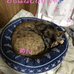 晩ご飯/めん/猫/にこ/くろ/黒猫 こんばんはです。 今日も一日お疲れ様です…(5枚目)